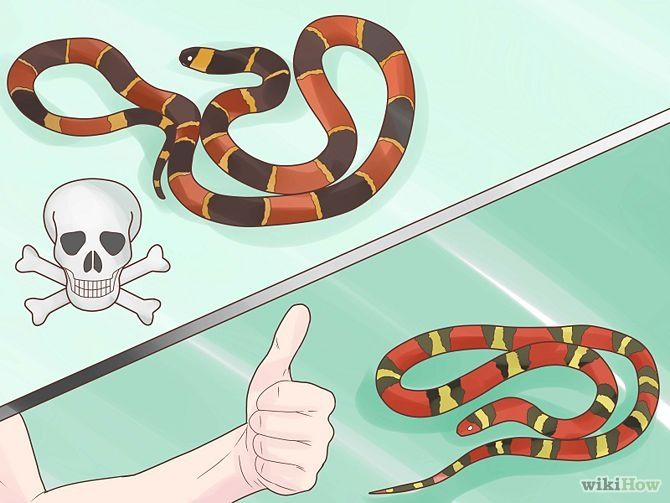 15b659636c1b Tell the Difference Between a King Snake and a Coral Snake