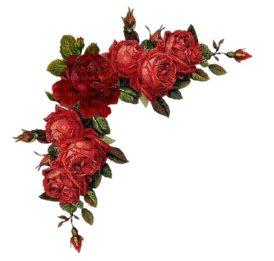 Gallery For Red Rose Border Png Red Roses Floral Image Floral