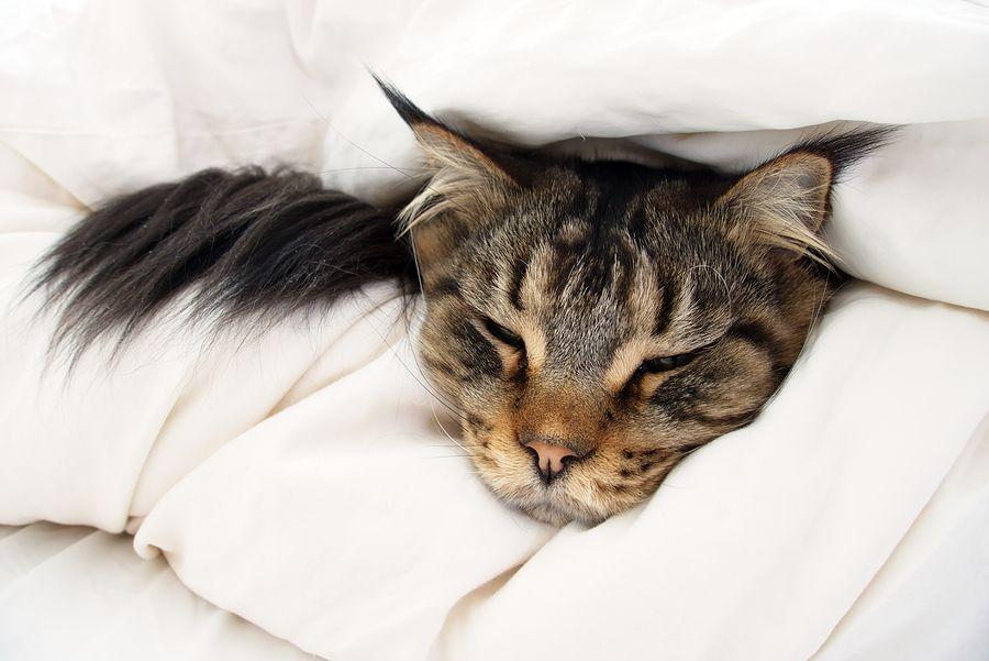 Pin by charlotte ryan on ja cats sick cat cat symptoms