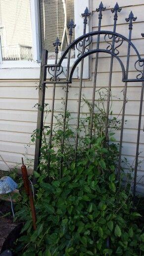Repurposed Wrought Iron Gate Garden Gates Wrought Iron Gate