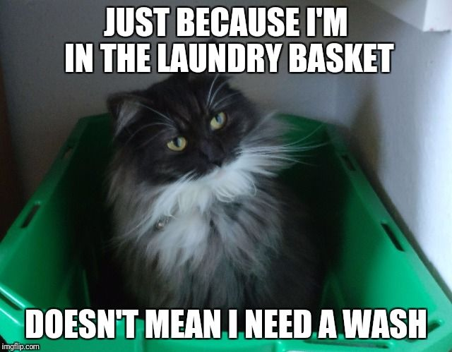 Image Tagged In Cat In Laundry Basket Cat Quotes Cats Funny Cats