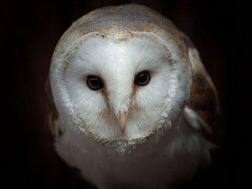 #animals #aves #birds