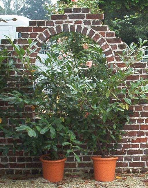 Ruinenmauer aus alten Mauerziegeln | Garten | Pinterest | Garten ...