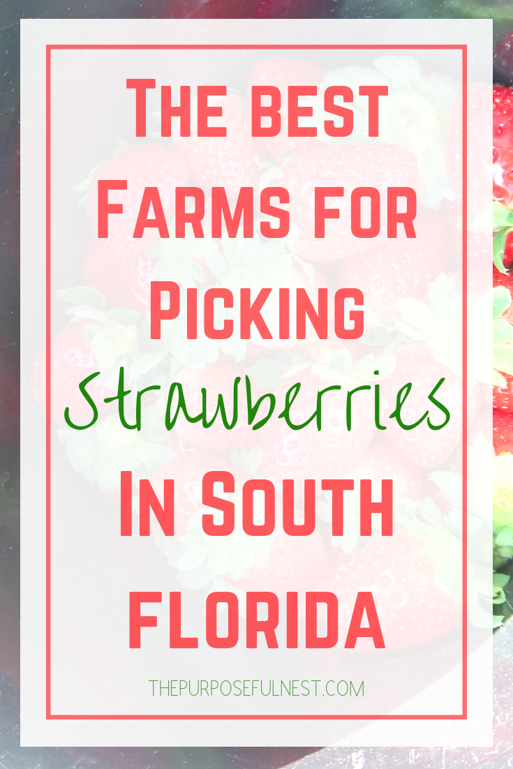 South Florida Strawberry Picking is part of South Florida Strawberry Picking The Purposeful Nest - If you're looking for locations to do a little South Florida strawberry picking you'll want to learn more about the farms on the list