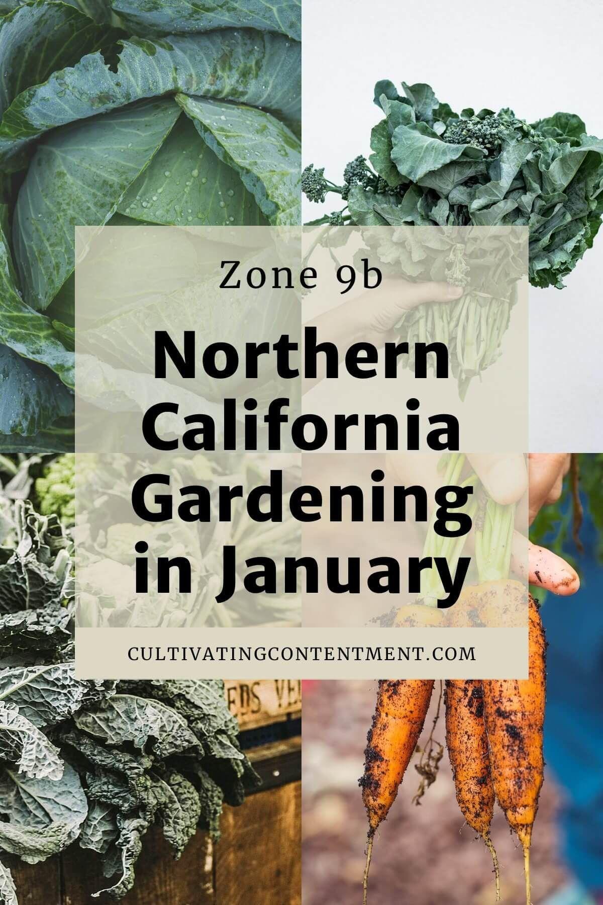 Nordkalifornien Das Im Januar Im Garten Arbeitet Sie Wissen Nicht Was Sie In Ihrem Wintergemusegart Wintergemuse Anbauen California Garten Nordkalifornien