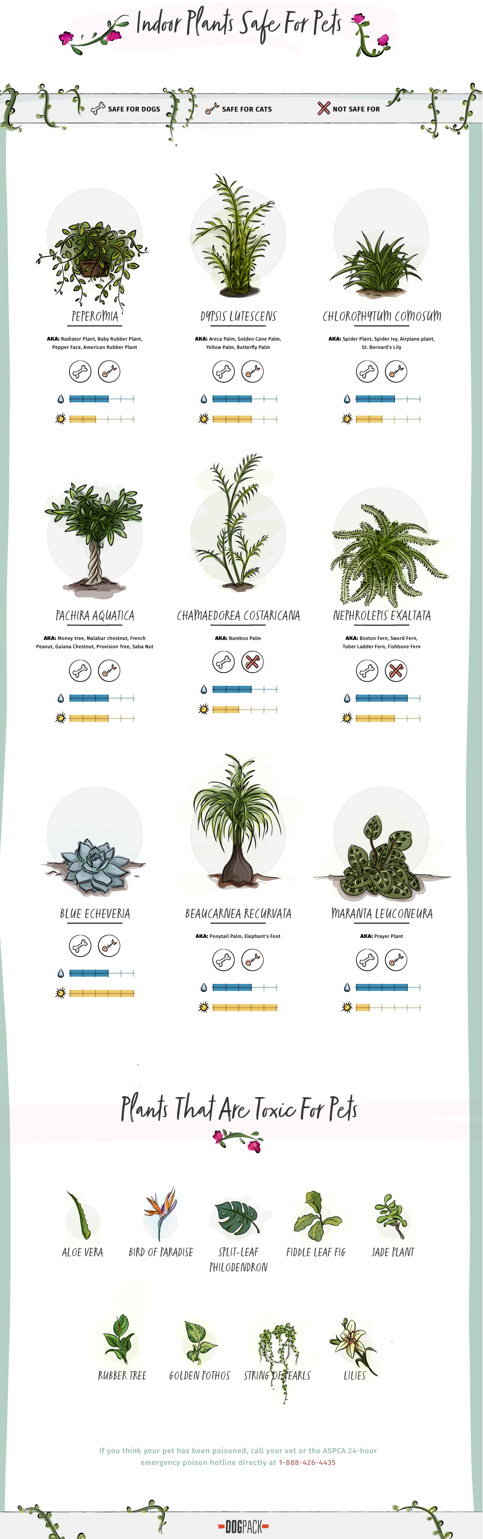 Pet Friendly Home Decor Tips Indoor Plants Safe For Pets And The Toxic Ones To Avoid Plants Poisonous Plants Indoor Plants