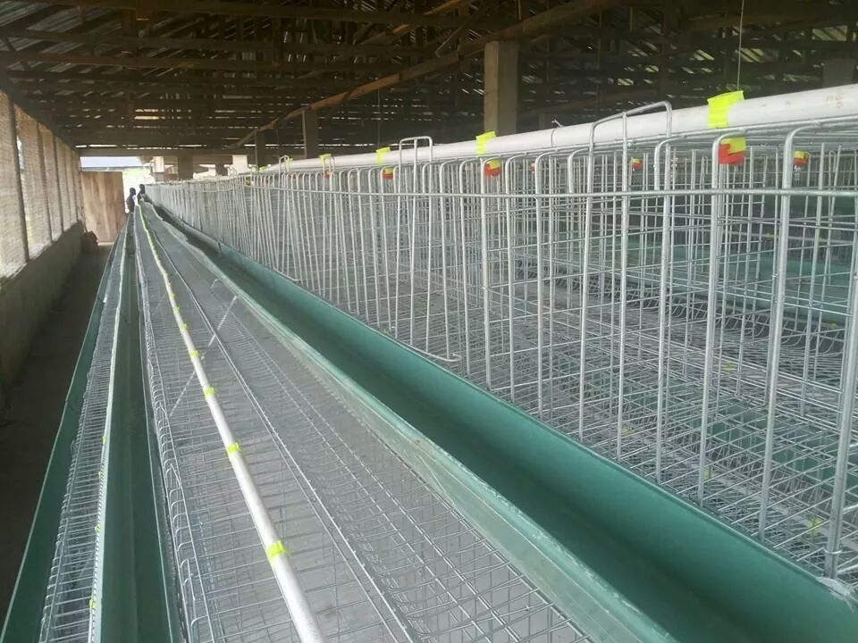 Poultry Battery Cages For Sale In Nigeria - Agriculture ...