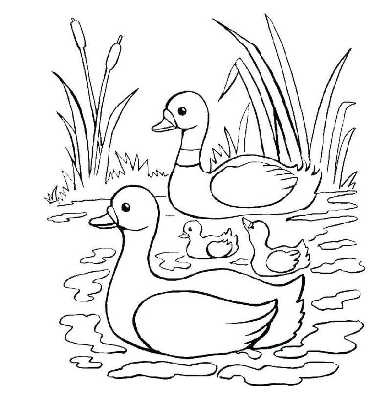 Cute Collection Of Duck Coloring Pages Free Coloring Sheets Animal Coloring Pages Coloring Books Coloring Pages