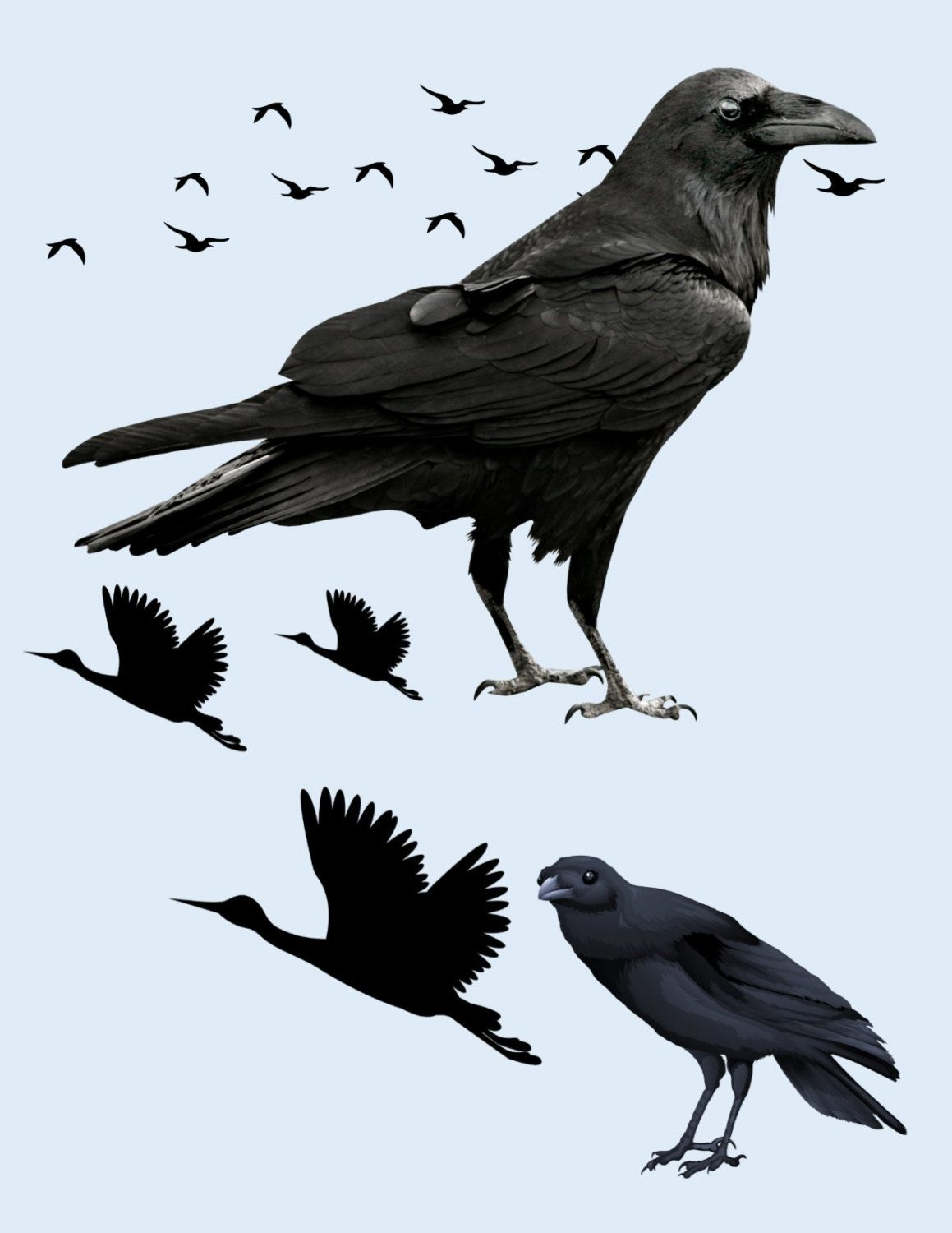 crow image crow cutout black bird image bird cutout large