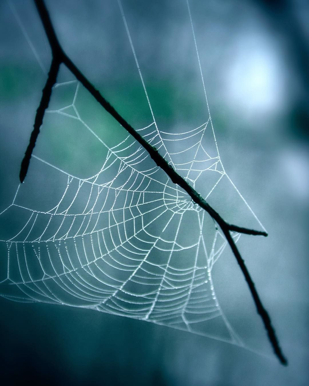 Itsy bitsy there's no spider  by dansade
