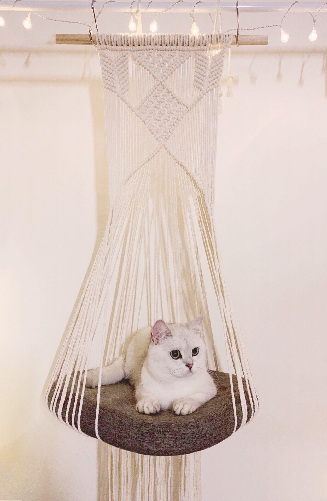 Hanging Macrame Cat Hammock Macrame Cat Swing Superior Etsy In 2020 Cat Hammock Pet Hammock Diy Cat Hammock