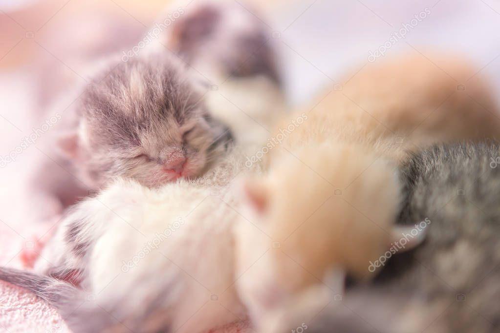 Small Newborn Kittens Sleeping In Hugs Baby Animals Sleep Fifth Day Of Life C Sponsored Sleeping Hugs Newborn Kittens Sleeping Kitten Baby Animals