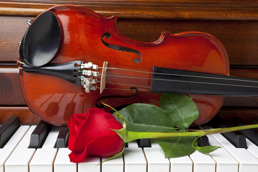 Image result for rose on the piano