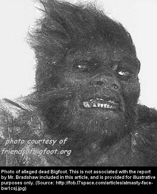 Mtstheleans Sasquatch Killed By Eruption Of Mt St Helens An