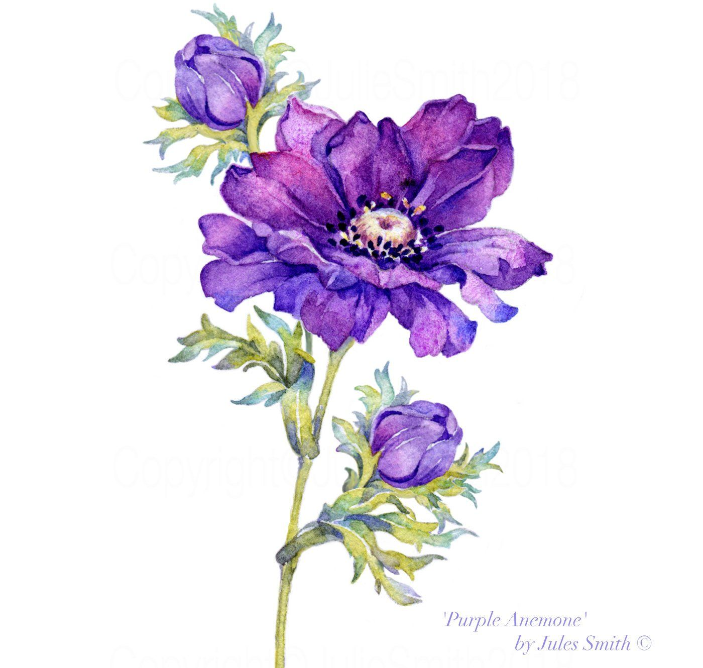 Watercolour Purple Anemone Limited Edition Reproduction Etsy Flower Prints Art Watercolor Flowers Paintings Watercolor Flower Art