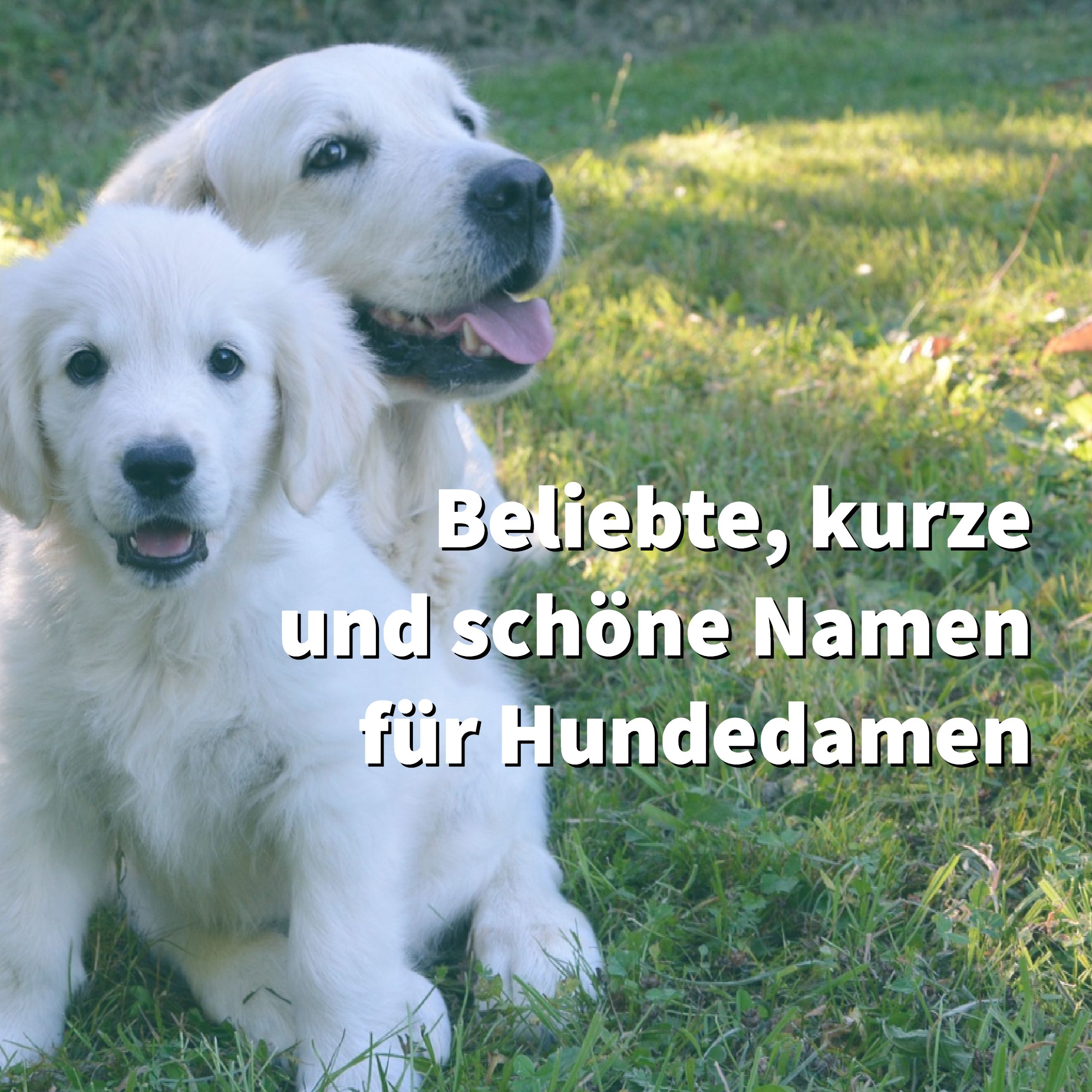 Top 10 Der Beliebtesten Weiblichen Hundenamen Liste Schoner Kurzer Namen Fur Hundedamen Weibliche Hundenamen Hundenamen Hunde