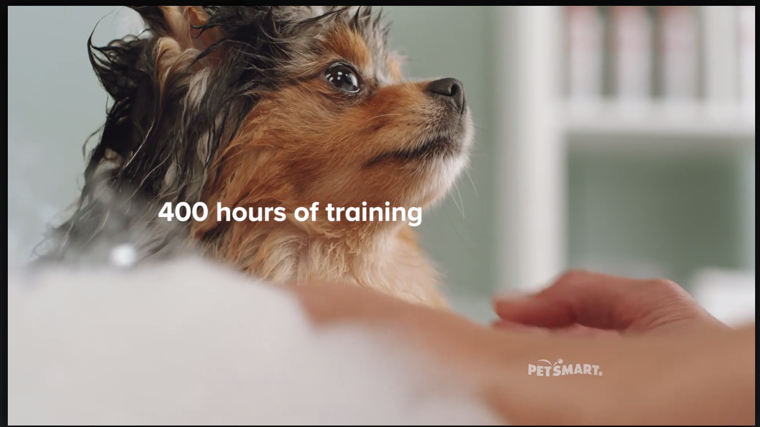 Sprout Of Mypompals Pomeranian Petsmart Grooming Commercial Petsmart Has All The Pet Facilities You Need From Gr Doggie Day Camp Dogs Emotional Support Dog