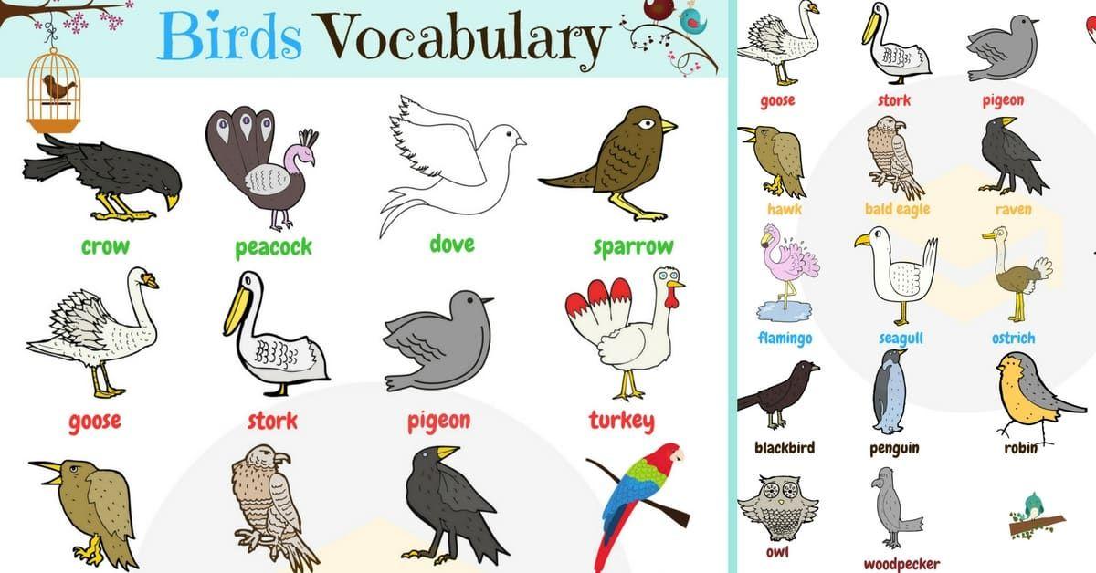 Madarszotar Angol Nyelven Ismerje Meg Az Angol Madarneveket 1 List Of Birds Birds Bird Species
