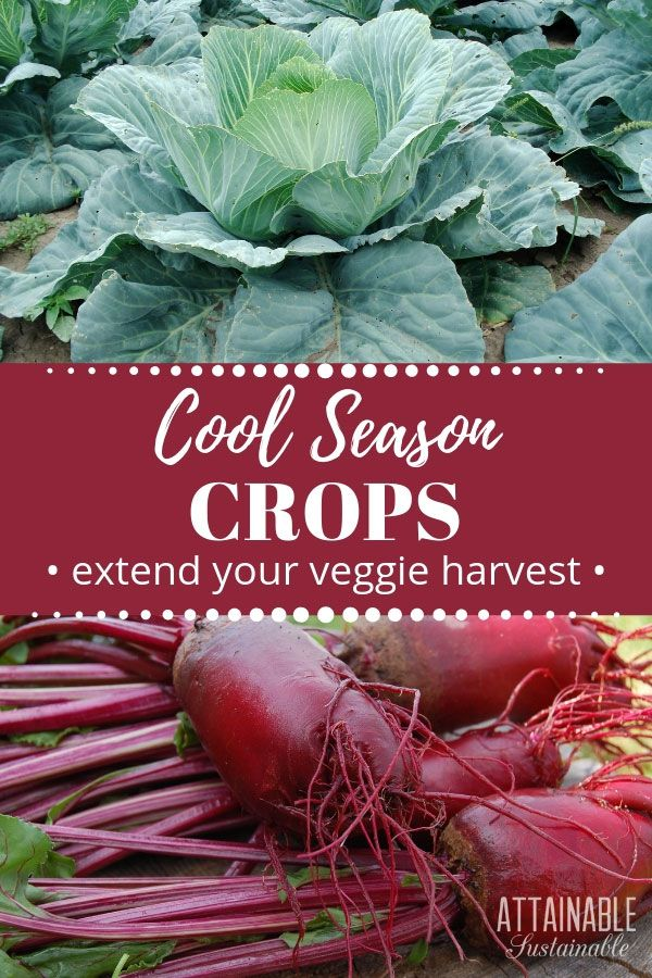 Fall Vegetables: Cool Weather Crops to Extend the Harvest #wintergardening
