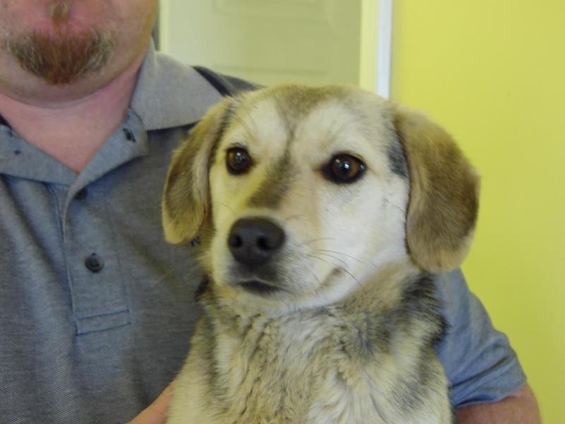 1 Year Female Beagle Cross Dog For Adoption: Meet Jazzy, A Petfinder Adoptable Beagle Dog