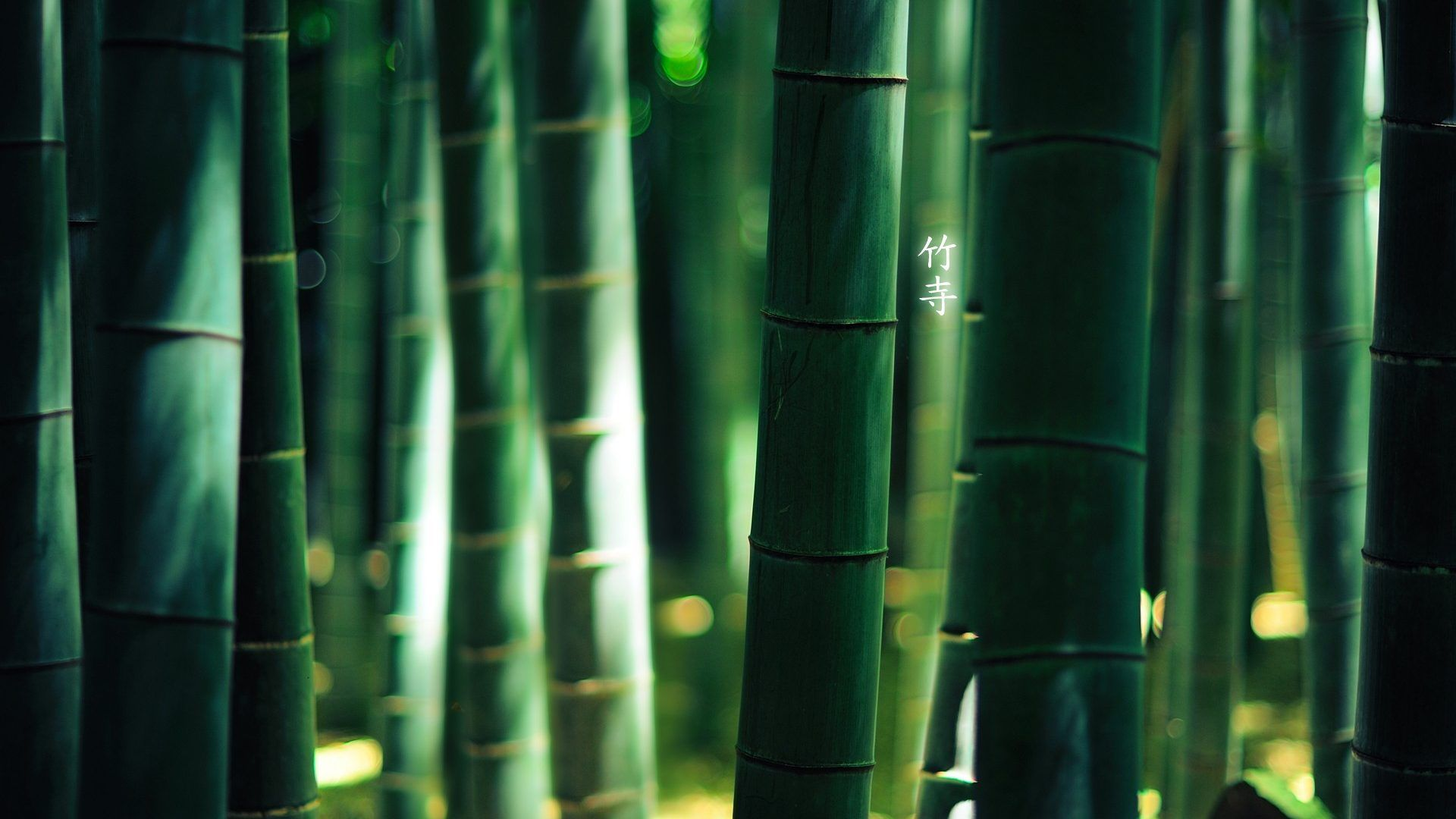 Image Result For Zen Inspired Litter Box Bamboo Wallpaper Hd