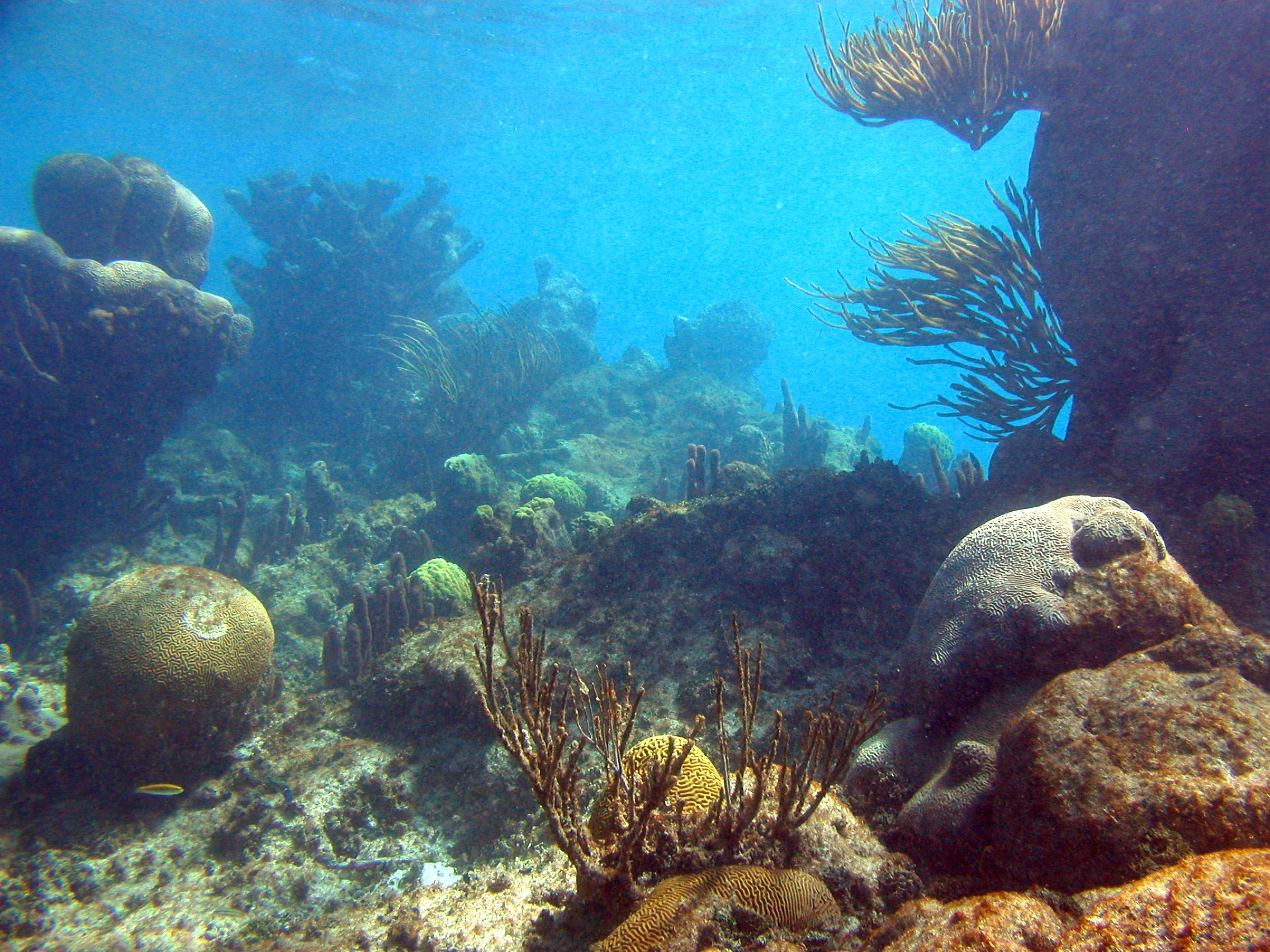 coral reef essay hol chan snorkel road affair