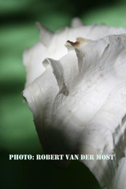 05-41_7975 copy Photo MY CHOICE - Photographer: Trebor-Robert van der Most