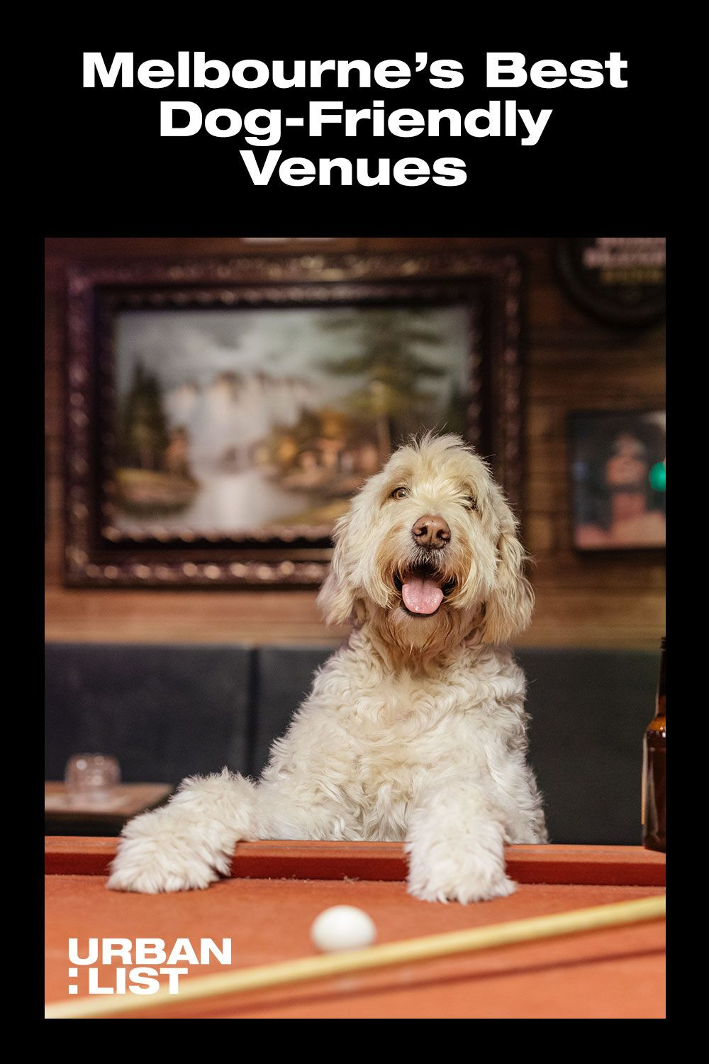 A Rundown Of The Best Dog Friendly Bars Cafes And Restaurants Around Melbourne In 2020 Dog Friends Dogs Best Dogs