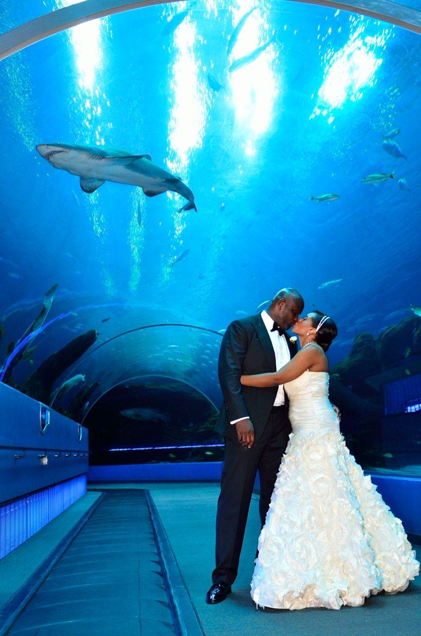 Din Photography Georgia Aquarium Wedding Atlanta Wedding Photographer Aquarium Wedding