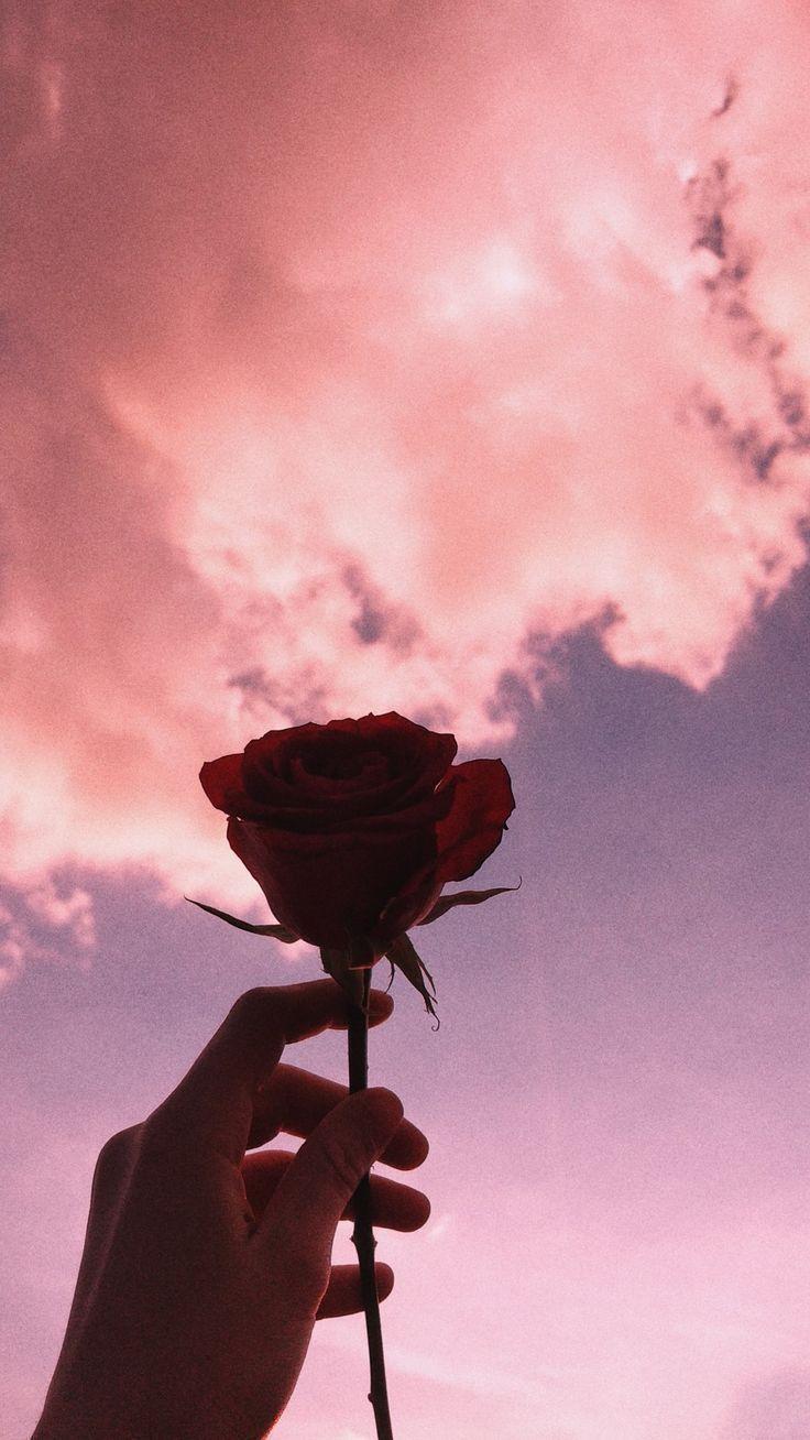 Ich wünschte, ich könnte dir von Zeit zu Zeit eine rosa Rose geben - Blumen Natur Ideen #cutelockscreenwallpaper