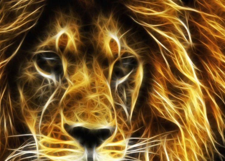 Pin By Susan Sauceda On Design Lion Wallpaper Lion Animal Wallpaper