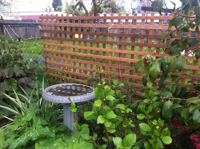 garden ideas to hide chain link fence