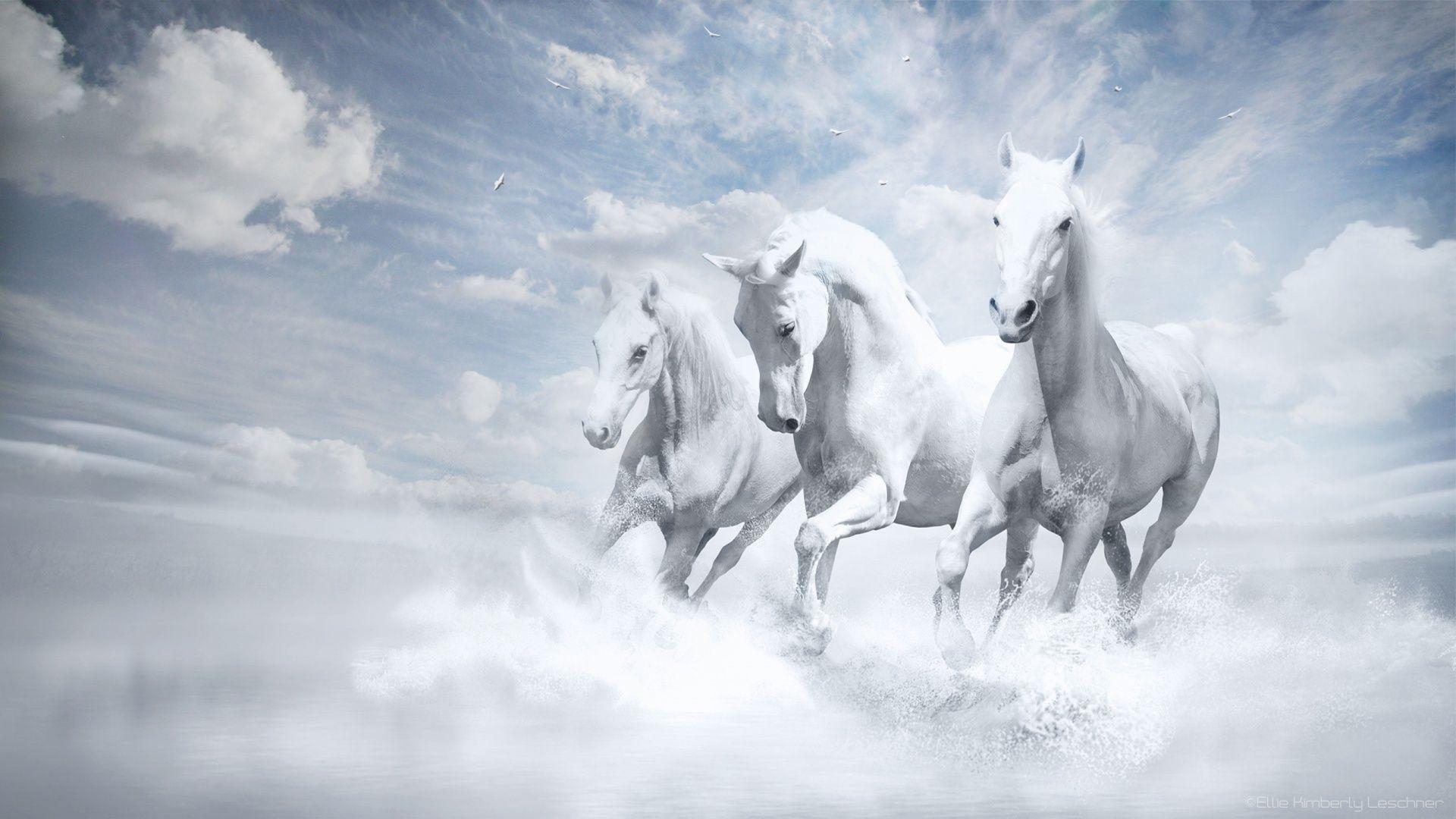 Fantasy Horses 1920x1080 423758 Horse Wallpaper White Horses Horses