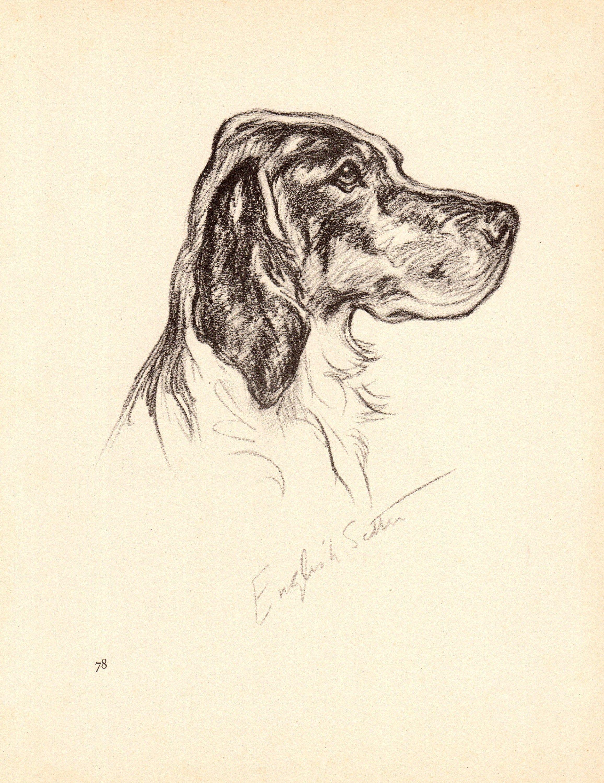English Setter by Lucy Dawson Art Print 1937 /'Mac/' Lucy Dawson Portrait Litho