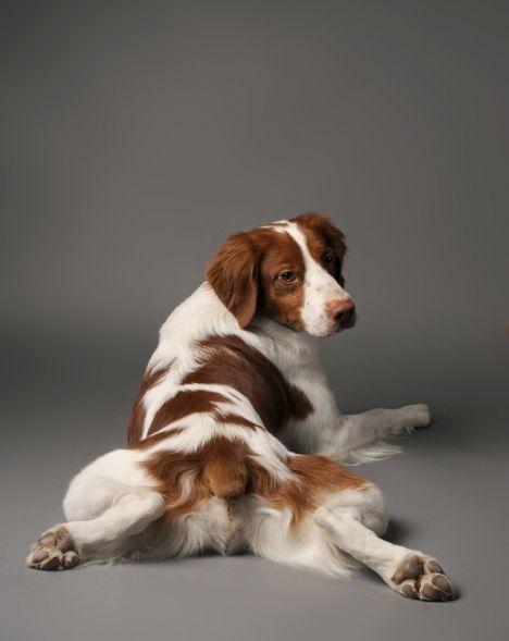 German Shorthaired Pointer Puppy For Sale Near Flint Michigan 74bd2d9d 5341 Pointer Puppies German Shorthaired Pointer Gsp Puppies