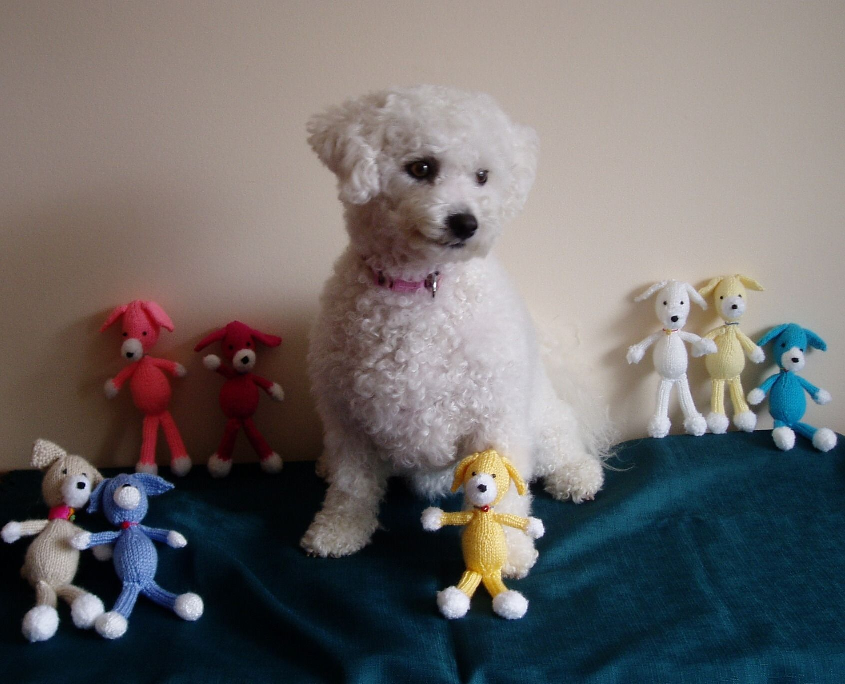 Free Knitting Patterns For You Child S Dolls Bichon Dog Bichon Frise Child Doll