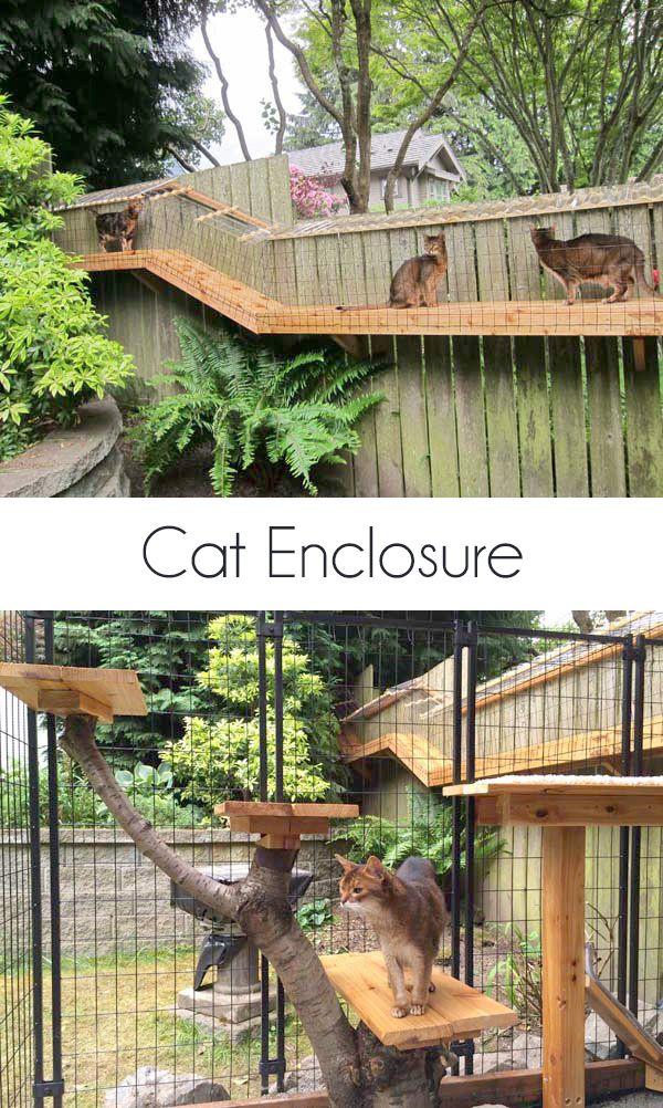 diy outdoor cat enclosure catio kitty and friends pinterest katzen kratzb ume und. Black Bedroom Furniture Sets. Home Design Ideas