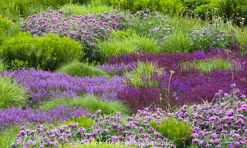 Lurie garden reconstructed prairie meadow garden perennial for Designing with plants oudolf
