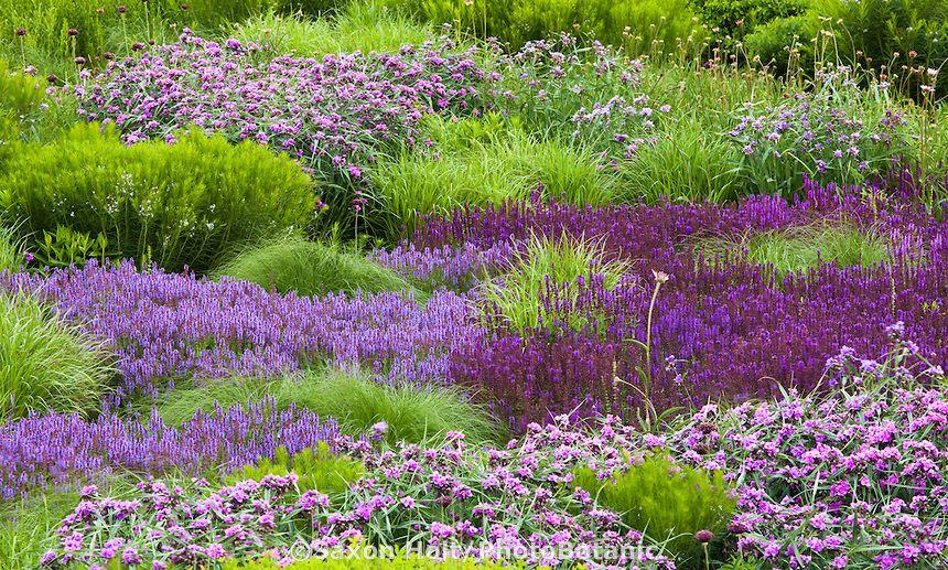 Lurie Garden Reconstructed Prairie Meadow Garden Perennial