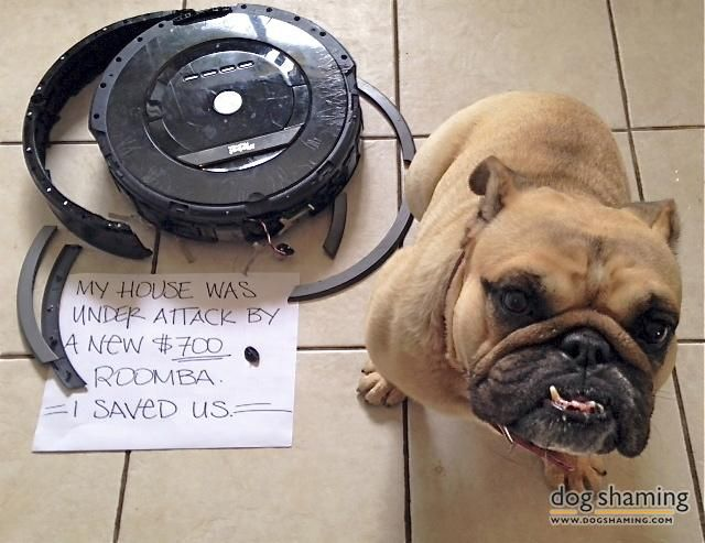 Bulldog Vs Roomba Dog Shaming Dog Shaming Photos Dog Shaming