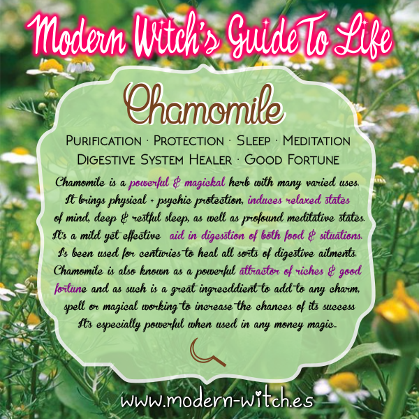 Chamomile Magickal herbs, Herbal magic, Green witchcraft