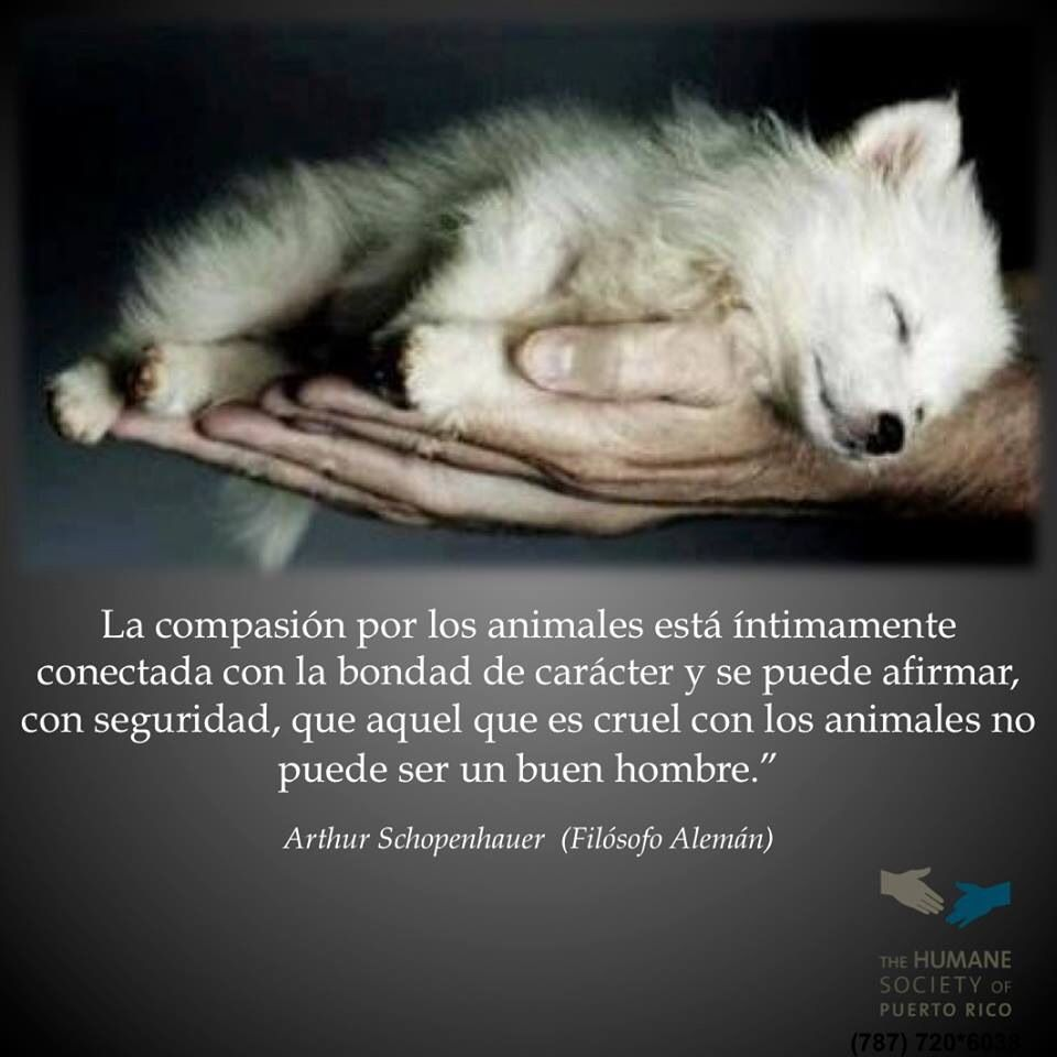 Proteccion Animal Frases Pinterest Animals Dogs Y Pets