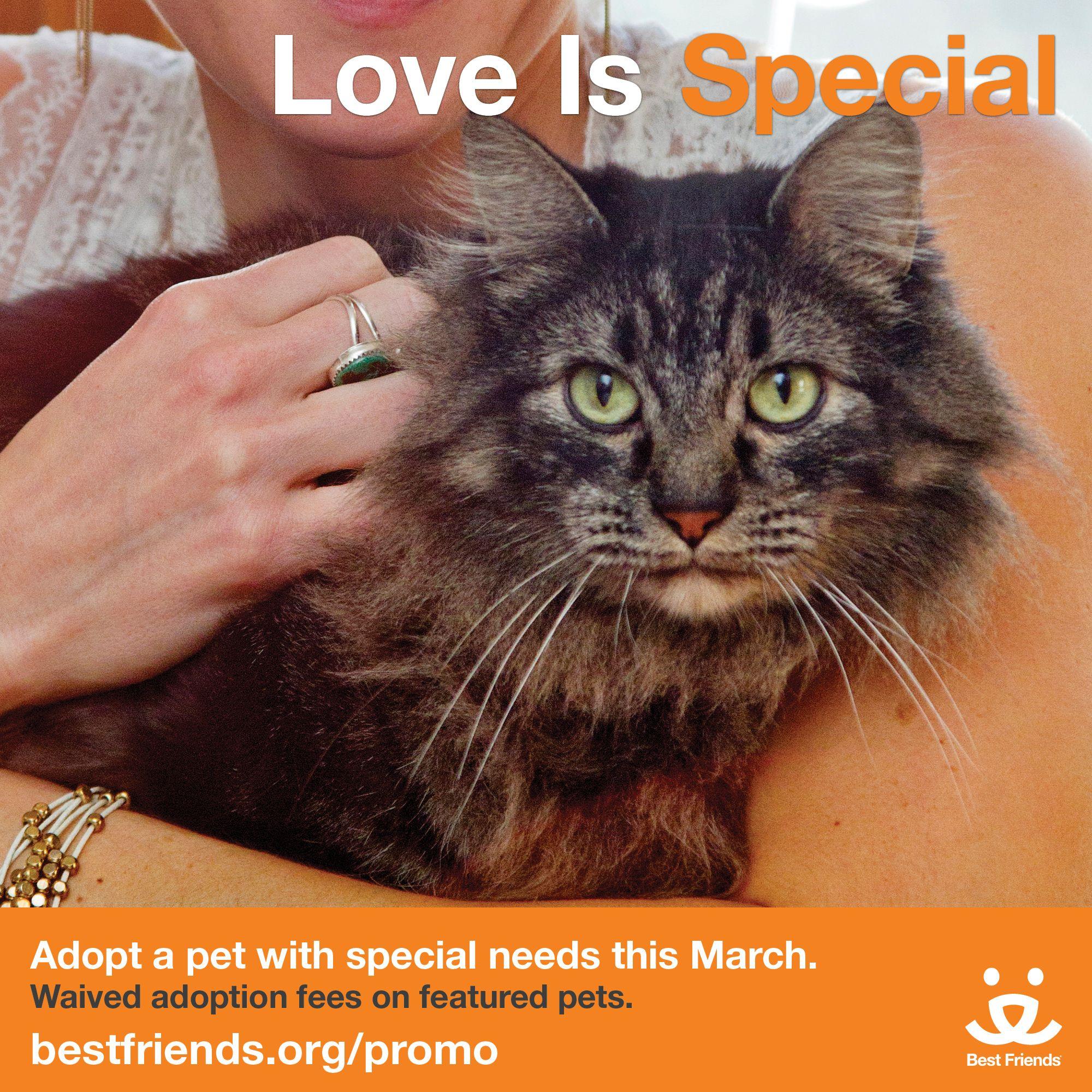 Adopt Near You Adoption, Pets, Animals