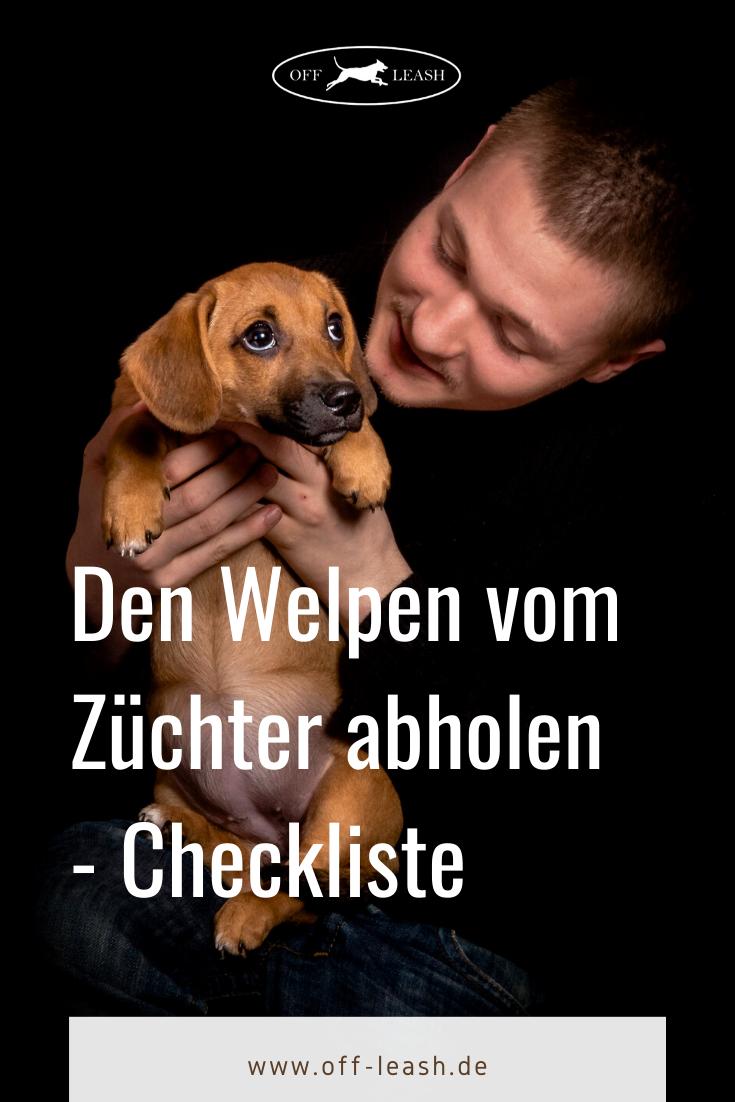 Den Welpen Vom Zuchter Abholen Checkliste Fur Die Erstausstattung Petphotography Abholen Blacklabs Checkliste In 2020 Welpen Hunde Welpen Erziehung Hundewelpen