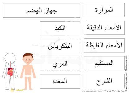 جسم الانسان مشروع جهاز الهضم 9 مسميات Words Word Search Puzzle Word Search