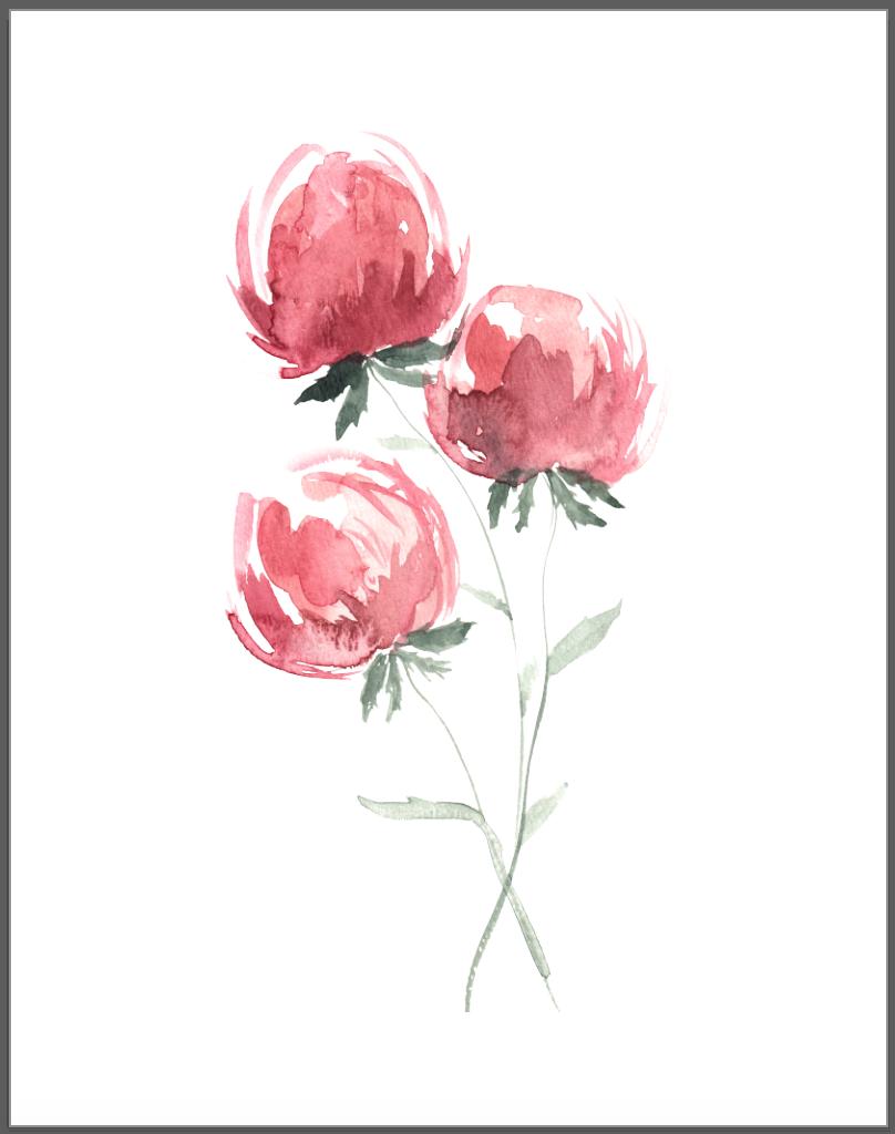 Simple watercolor flower, watercolor peony, peonies ...