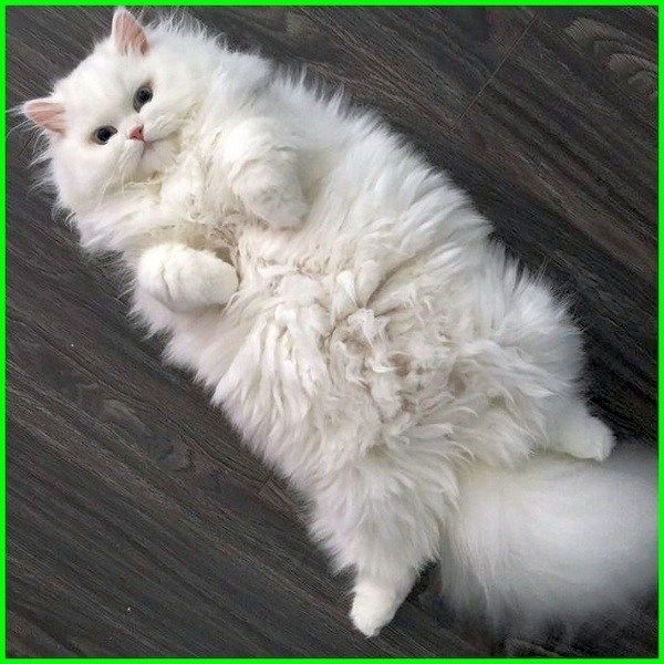 Gambar Kucing Lucu Aesthetic godean.web.id