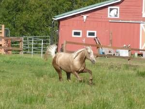 Seattle Farm Garden Classifieds Horse Craigslist Farm