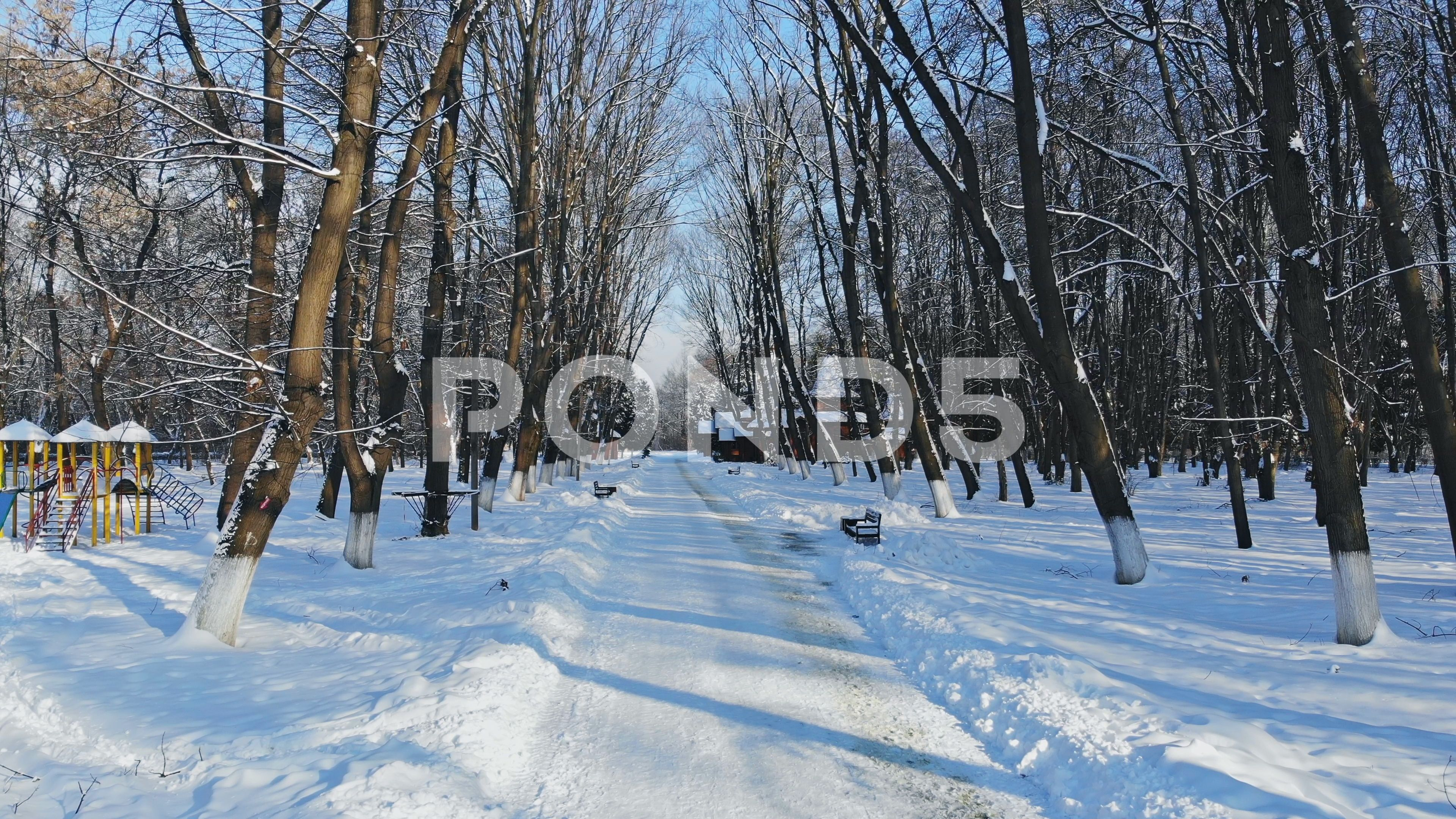 Snowy Road In Forest Nature Landscape At Cold Day In Winter Forest Stock Footage Ad Nature Landscape Forest Snowy Winter Forest Landscape Forest
