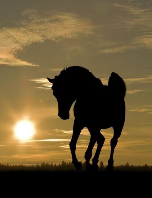 pin von piola marie auf silhouette and shadows pinterest pferde sch ne pferde und tier. Black Bedroom Furniture Sets. Home Design Ideas